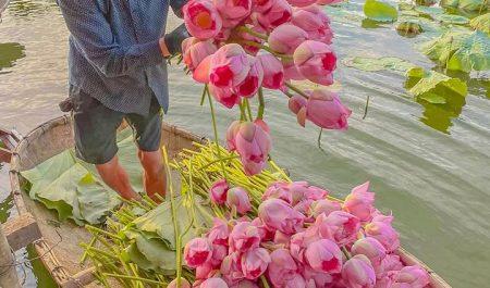 Đầm sen ở Hà Nội