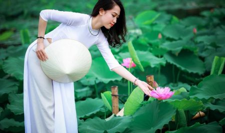 Chụp ảnh đầm sen ở Hà Nội
