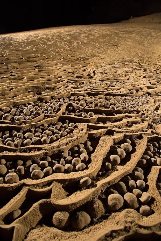 Ngọc tra ở hang Sơn Đoòng