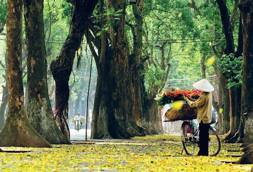 Đường Hoàng Diệu mùa thu