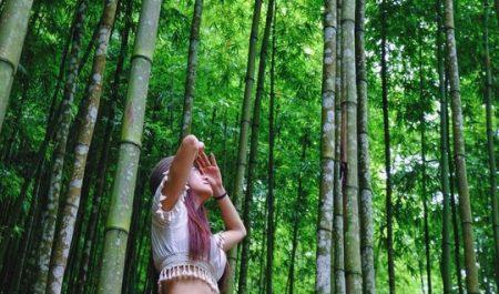 Địa điểm checkin rừng trúc mù cang chải
