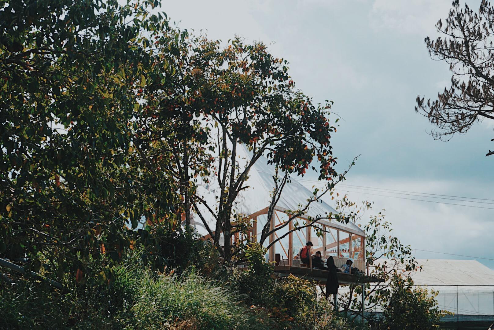 Vườn hồng chín Đà Lạt