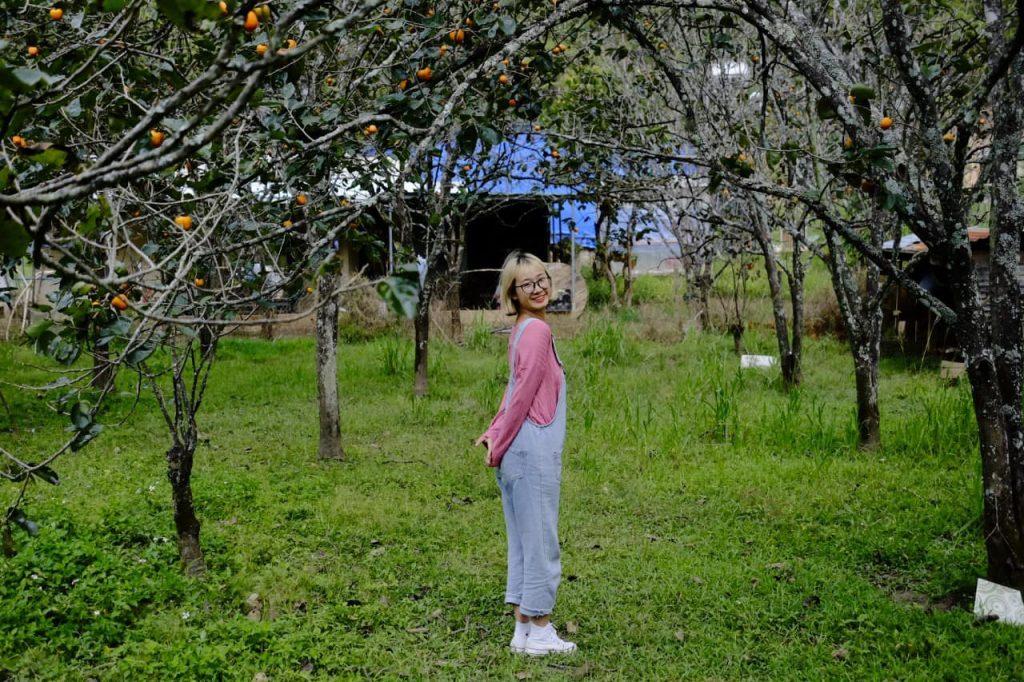Vườn hồng chín ở Mimosa