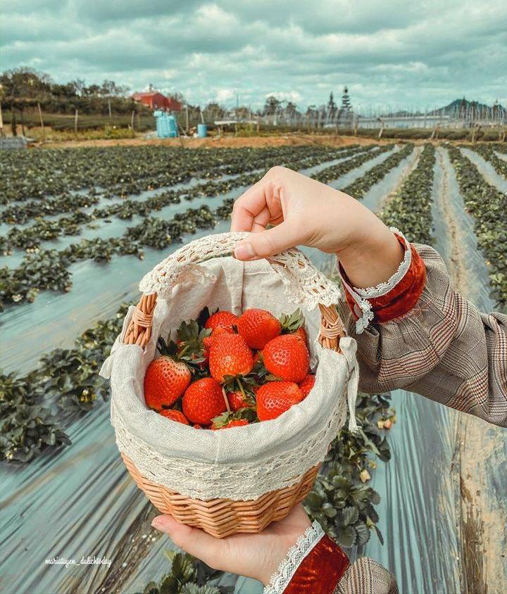 Địa chỉ chimi farm Hà Nội