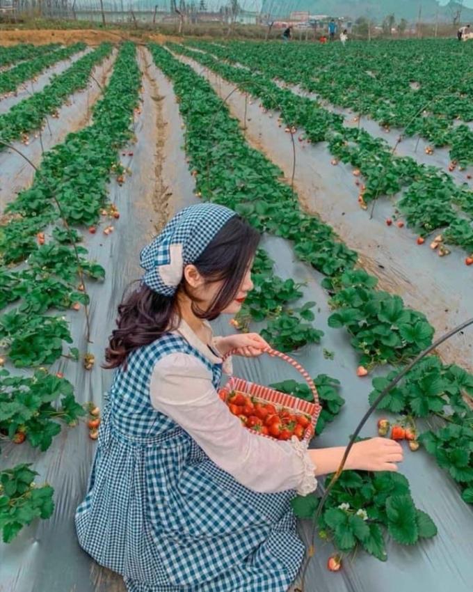 Chimi Farm Hà Nội