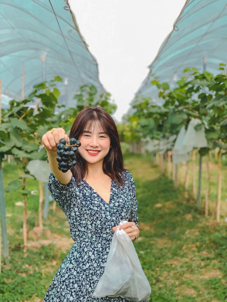 Vườn nho ở Chimi Farm