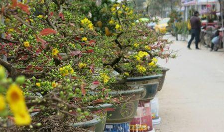 Chợ hoa ngày Tết Hà Nội