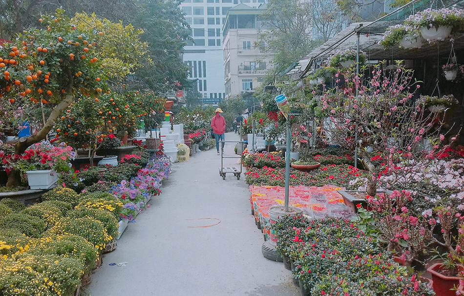 Chợ hoa Tết Hà Nội