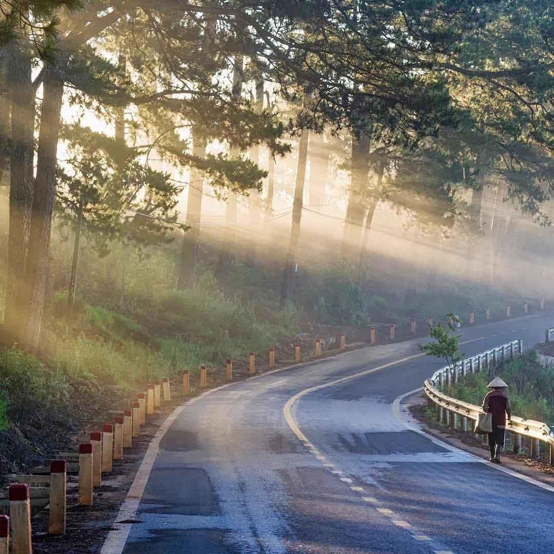 Rừng thông hồ Tuyền Lâm Đà Lạt